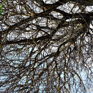 ARBRACINE 1A : ESPRIT LIBRE PHOTO DU MONDE