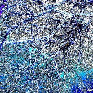 ARBRACINE 1D : ESPRIT LIBRE PHOTO DU MONDE